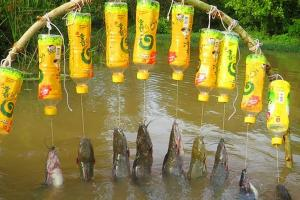Survival Fishing Strategies When You Don't Have Fishing Equipment